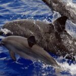 US bans swimming with Hawaii's nocturnal spinner dolphins
